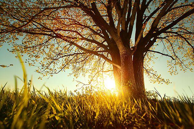 どっしりと大地に根を張る樹木