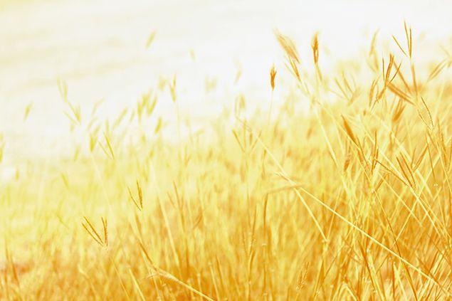 自然のなかの金色